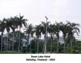 swan lake hotel 2002