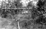 Water Pipe Thru Jungle
