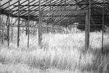 Old Greenhouse.jpg