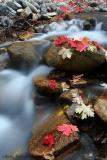 Sumit Creek