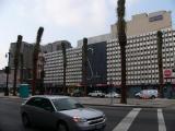 New Orleans - palmiers.jpg