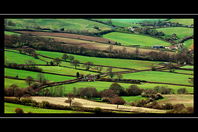 Country lanes, Dorset