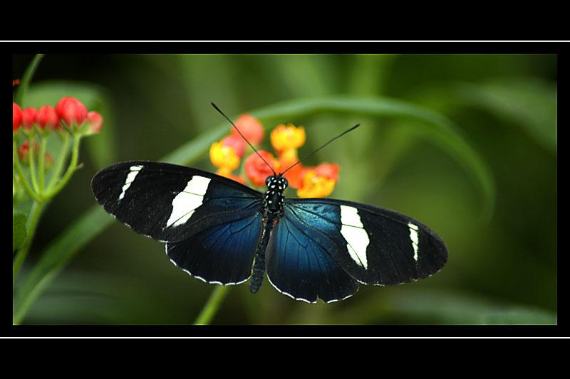 Butterfly, Buckfast Butterflies, Buckfastleigh, Devon