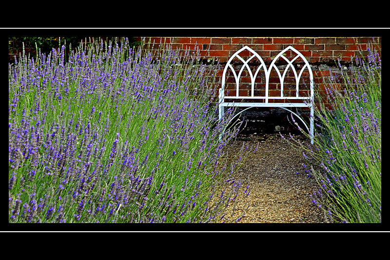 Seat and lavender, Coughton Court (3171)