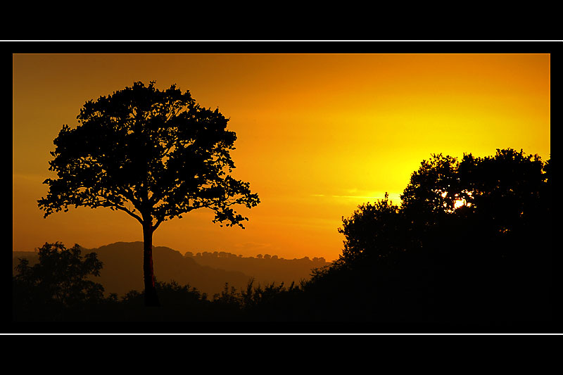 Sunset silhouette, Somerset