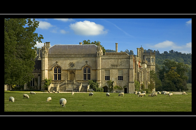 Field of sheep, Lacock Abbey, Lacock, Wiltshire