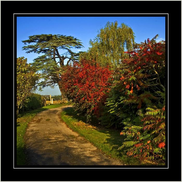 Church lane and cedar tree, Martock, Somerset