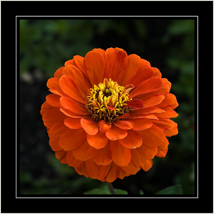 Brilliant orange flower, no idea where!!