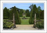 Topiary pyramids, Athelhampton House (3332)
