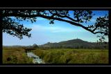 Across the fields to Glastonbury Tor, Somerset