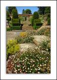Daisies and orangery, Mapperton Gardens (3100)