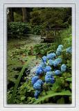 Hydrangeas, lilies and jetty, Mount Stewart, Newtownards, County Down, N. Ireland