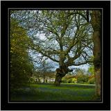 Trees and bluebells, Stourhead, Wiltshire