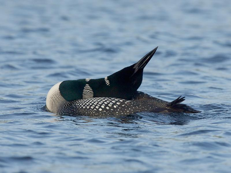 Grafton Pond  Enfield New Hampshire Loon Neck Stretch