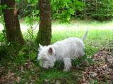 Theo en chercheur de truffes ...