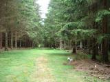 Forêt du Donon