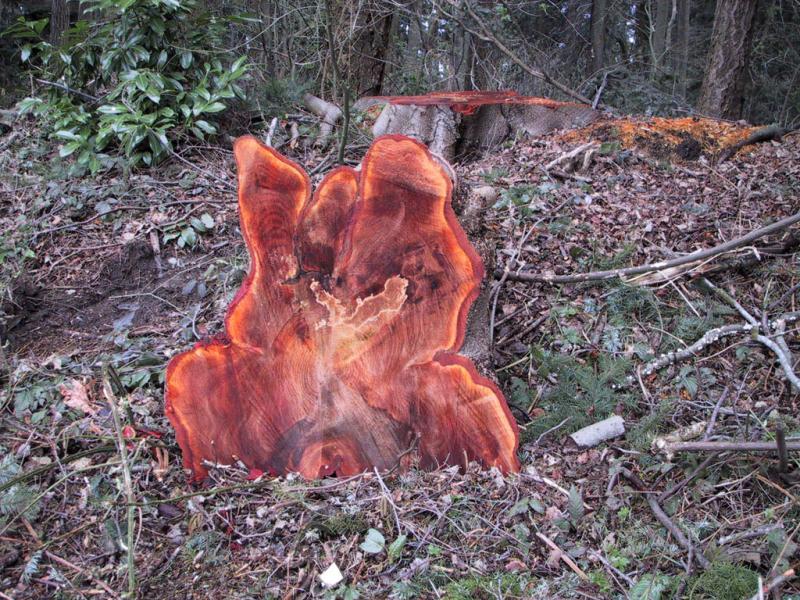 Log on Fire (Tracy Kolenchuk)
