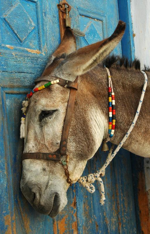 Donkey (Geoffrey T. Bell)