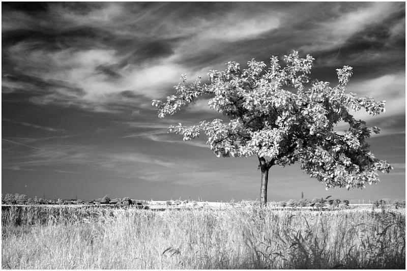 Tree b&w