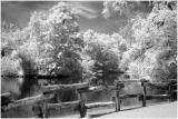 Local pond_e