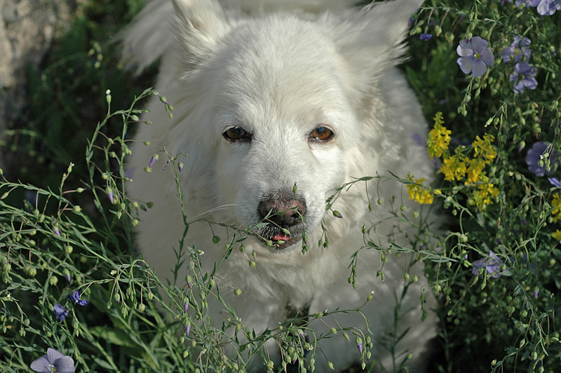 Tilki amongst the greenery