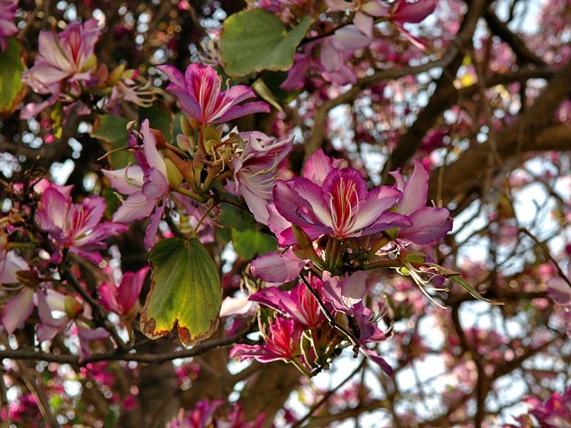 Girne flowers