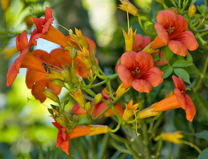 Datça flowers
