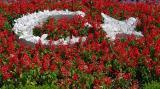 Turkish flag in flowers