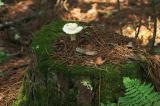 Tea table for wood sprites