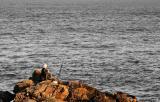 Aberdeens new fishing quota...