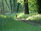 La chasse à cour a lieu à chaque année dans les forêts du château...les cerfs et sangliers sont au menu.
