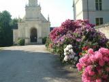 Bosquet de fleurs décoratives