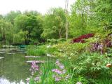 Végétation entourant le bassin