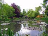 Bassin des nympheas(3)