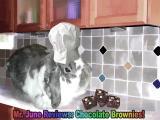 Wally Reviews Chocolate Brownies!
