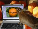 The Annual Pet Bunny Halloween Gallery