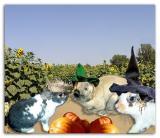 Van Gough, SA & Spice - Scarecrows