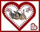 Love Bugs - Boomer & Cricket