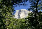 half dome framed by trees