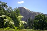 half dome from field 1