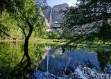 yosemite falls thru the trees 1