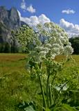 yosemite flowers 2