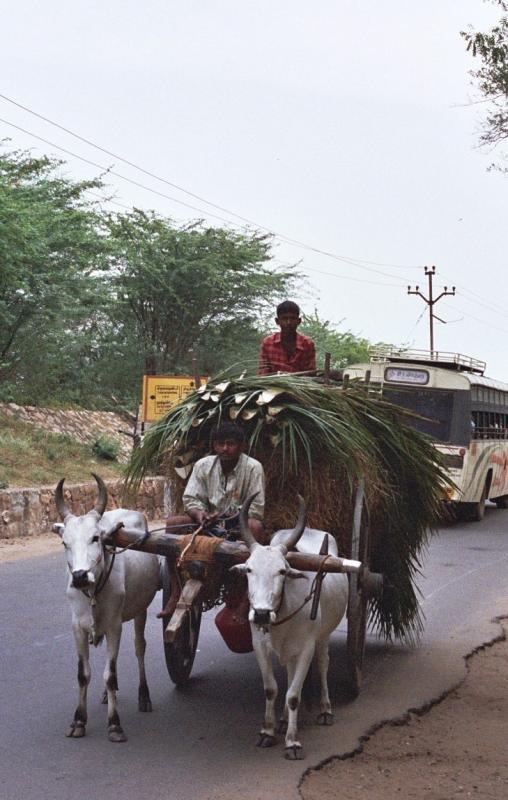 Bullock cart en route to Tiruchendur