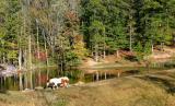 Horse & Pond  10/16/05