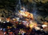 Splash!  10/29/05