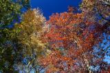 Oak & Birch  11/02/05