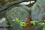 Stream Rocks.jpg