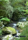 Green Along Roaring Fork.jpg
