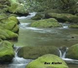 Elkmont Creek.jpg