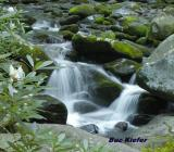 Rhododendrons on Roaring Fork.jpg
